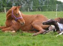 Zasady jazdy konnej