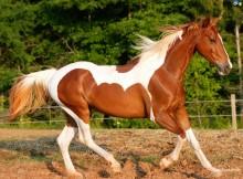 wlasny kon